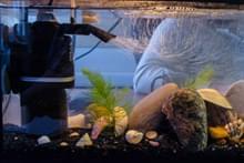 Нано-аквариумистика