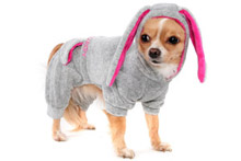 Домашняя одежда для собак