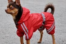 Дощовик для собаки
