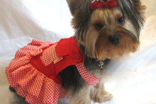 Сукні для собак