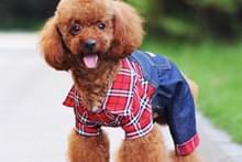 Джинси для собак