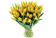 Срезанные цветы