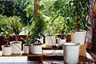 Комнатные растения, рассада и цветы