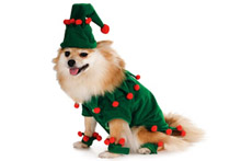 Карнавальний костюм для собак