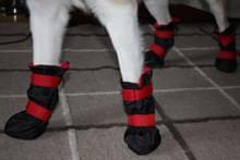 Взуття для собак